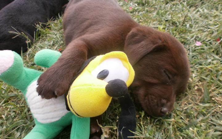 Puppy sleeping
