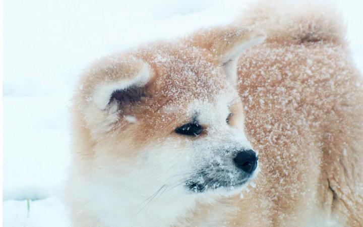 dogs in snow 01 Tatsuya Kensha