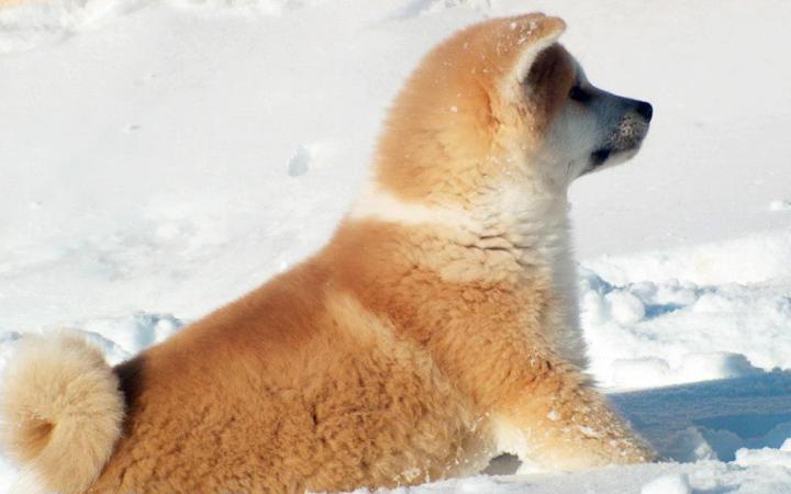 dogs in snow 02 Tatsuya Kensha