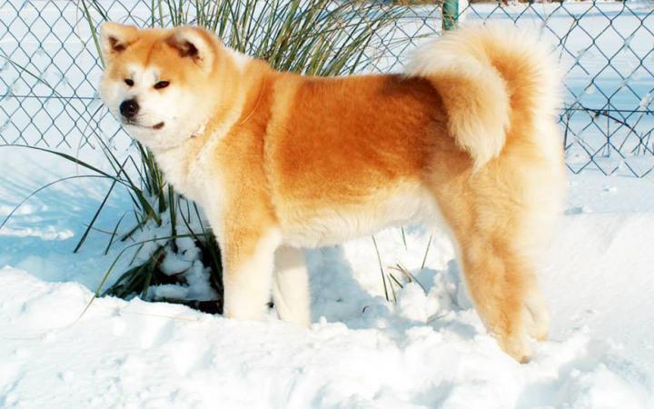 dogs in snow 04 Tatsuya Kensha