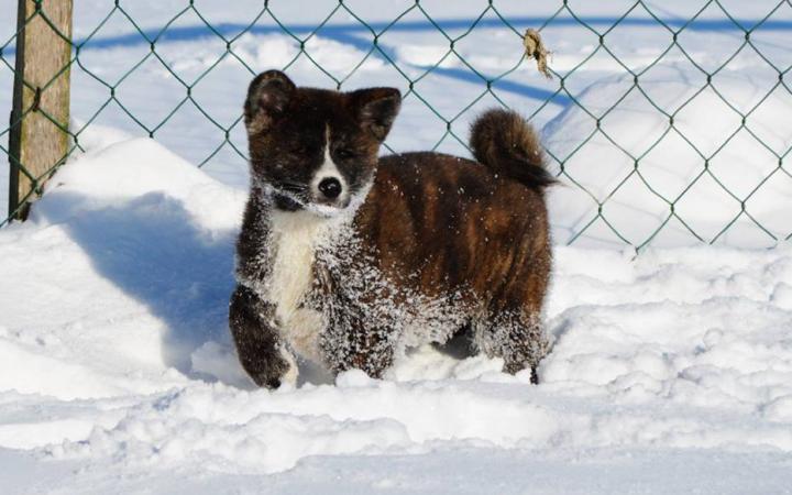 dogs in snow 09 Tatsuya Kensha
