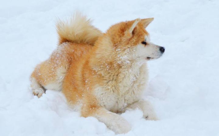 dogs in snow 12 Tatsuya Kensha
